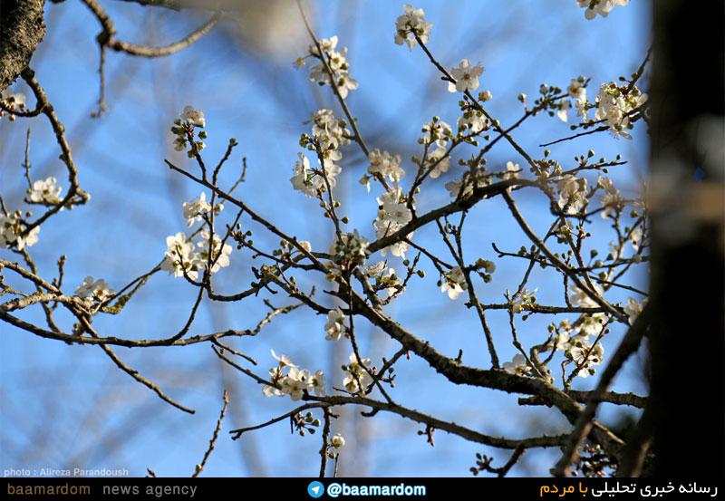 بهار بوی امید می دهد