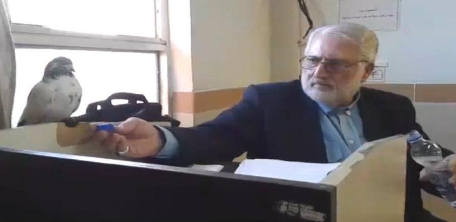 ویدیو/ آب دادن استاد دانشگاه گیلان به یک کبوتر در داخل کلاس!