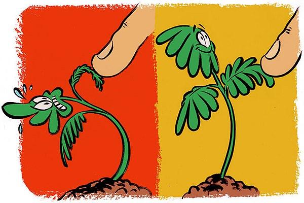اگر برای گیاهان خاطره خوب بسازید شما را به یاد میآورند