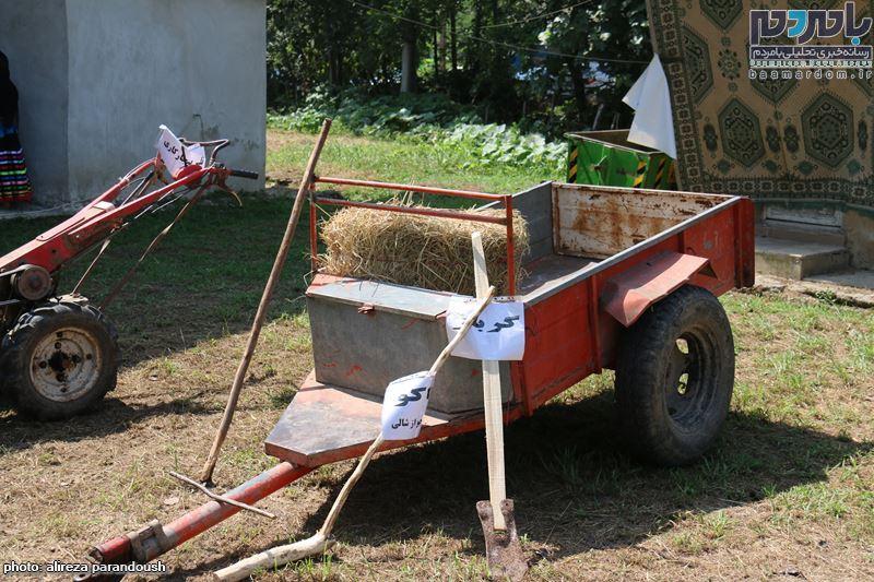 نخستین جشنواره برنج در سیاهکل 30 - نخستین جشنواره شکرانه برداشت برنج در سیاهکل برگزار شد