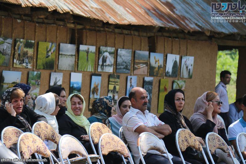 نخستین جشنواره برنج در سیاهکل 32 - نخستین جشنواره شکرانه برداشت برنج در سیاهکل برگزار شد