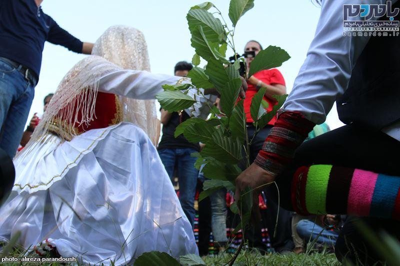 نخستین جشنواره برنج در سیاهکل 50 - نخستین جشنواره شکرانه برداشت برنج در سیاهکل برگزار شد