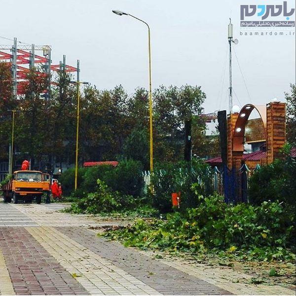 درختان جنب مهمانسرای جهانگردی به دلیل پوسیدگی قطع شده اند