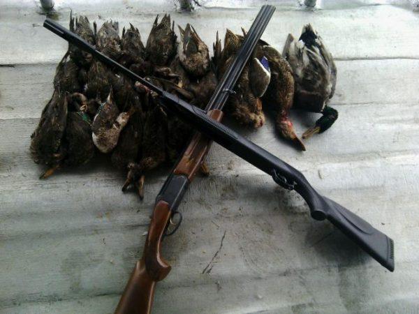 کشف و ضبط سلاح غیر مجاز و ۱۹ قطعه پرنده در چمخاله لنگرود