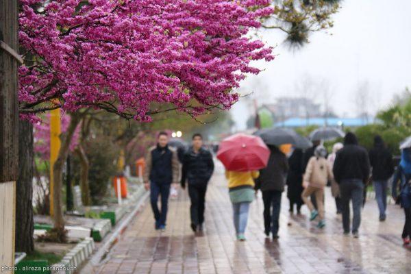باران 1 - آخر هفته ی بارانی در انتظار گیلان