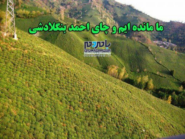 ما مانده ایم و چای احمد بنگلادشی!