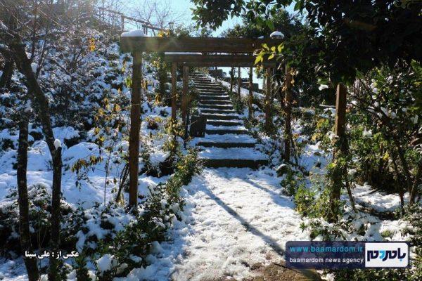 طبیعت لاهیجان پس از بارش برف پاییزی