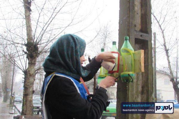 نصب دانه خوری برای پرندگان در شهر سیاهکل + فیلم و عکس