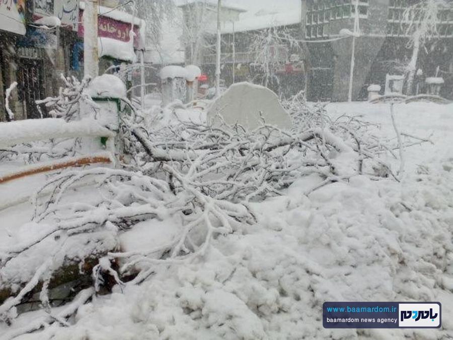 بارش شدید برف لاهیجان   بسته شدن اتوبان   سقوط درختان + گزارش تصویری