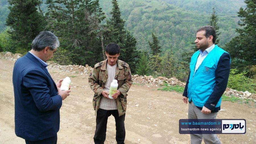 برداشت گل گاو زبان در اشکورات 9 - اولین برداشت گل گاو زبان در اشکورات رحیم آباد + تصاویر