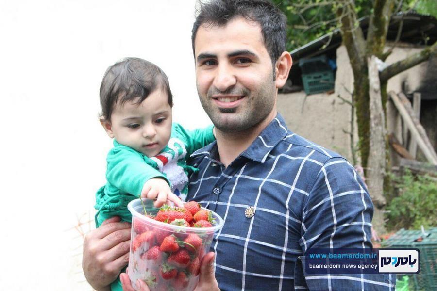 گزارش تصویری سومین جشنواره توت فرنگی در روستای سی دشت شهرستان رودبار