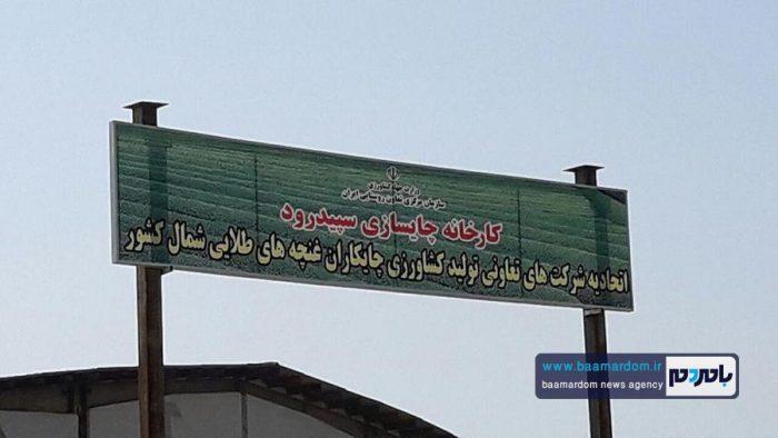 افتتاح مجدد کارخانه چایسازی سپید رود 1 - راهاندازی مجدد یکی از بزرگترین کارخانههای چایسازی خاورمیانه در گیلان