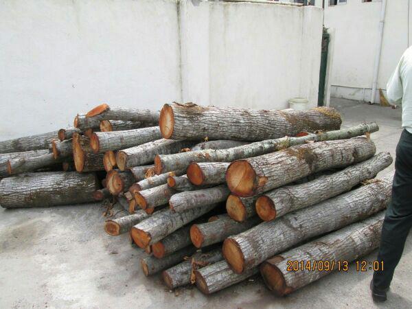 کشف ۳ تن چوب قاچاق در فومن