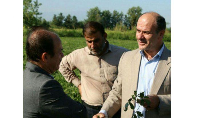تولید بیش از ۸۰ درصد بادامزمینی مورد نیاز کشور در آستانه اشرفیه
