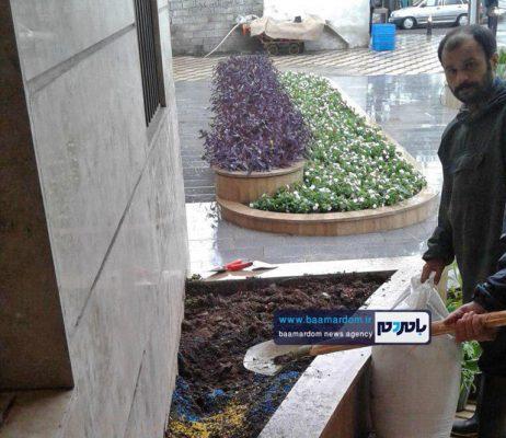 دزدی کاکتوسهای میلیونی شهرداری آستانهاشرفیه 2 462x400 - دزدی کاکتوسهای میلیونی شهرداری آستانهاشرفیه برای دومین بار! + تصاویر