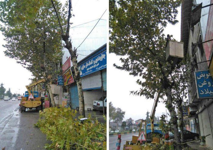 هرس درختان معابر شهری لنگرود برای جلوگیری از آتشسوزی و اتصالات برقی