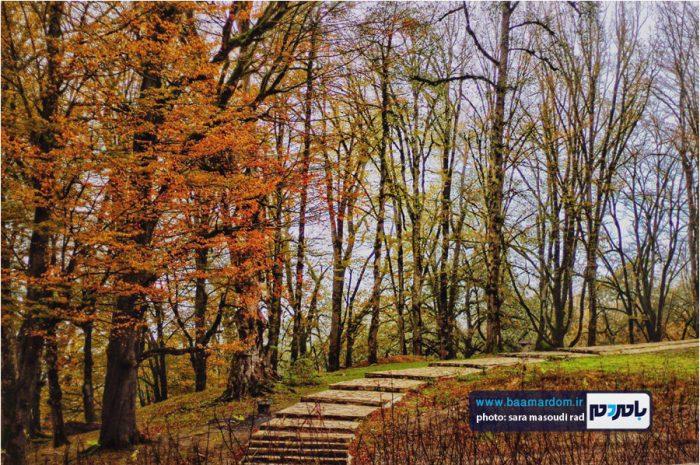 طبیعت زیبای گیلان در پاییزی که گذشت   گزارش تصویری
