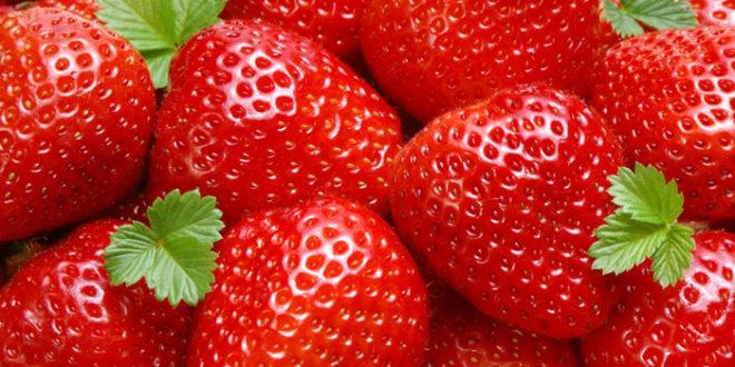 تولید ۴۰۰تن توت فرنگی گلخانهای در گیلان