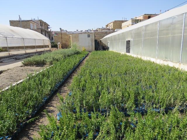 تولید سالانه ۱۹میلیون اصله درخت و درختچه در گیلان