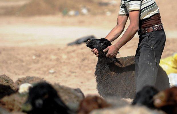قطع دست یک نفر در مشهد به دلیل دزدی گوسفند