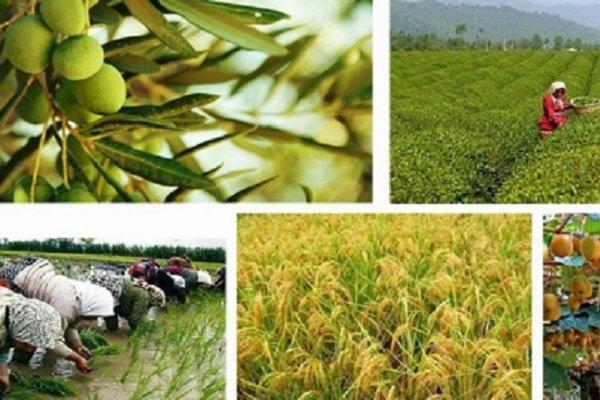 سومین کنفرانس ملی دانشجویی اقتصاد کشاورزی در گیلان برگزار می شود