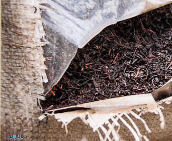 دو تن چای در شهرستان صومعه سرا امحا شد