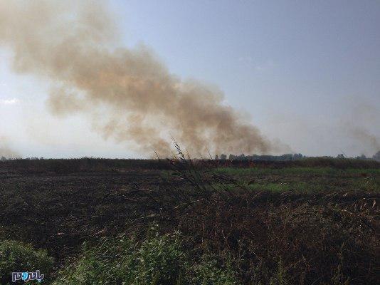 آتشسوزی در نیستانهای تالاب انزلی