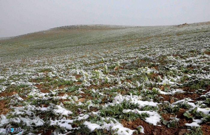 بارش برف بهاری ارتفاعات گیلان را سفیدپوش کرد