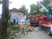 مراسم سوگواری قطع درختان سیاهکل برگزار میشود! |  قتل عام درختان در خیابانهای سیاهکل + تصاویر