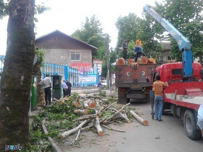 مراسم سوگواری قطع درختان سیاهکل برگزار میشود!   قتل عام درختان در خیابانهای سیاهکل + تصاویر