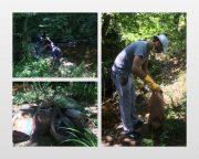 سرنوشت عجیب زبالههای پاکسازی شده توسط دوستداران محیط زیست لاهیجان! +تصاویر