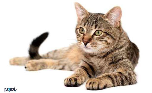 برنامهای که صدای گربهها را ترجمه میکند!