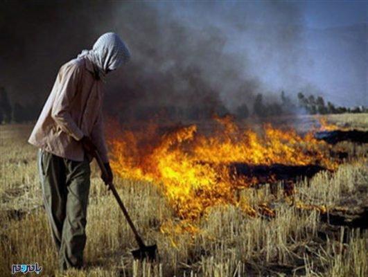 کاه و کلش 531x400 - خودداری کشاورزان از سوزاندن کاه و کُلش در مزارع / پیش بینی یکسال زندان برای افراد خاطی