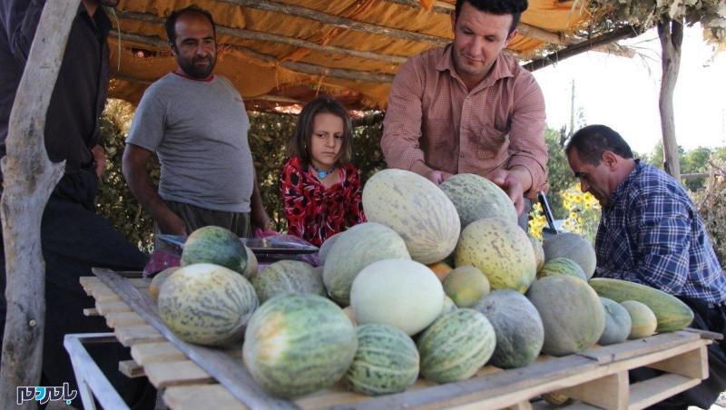 یکصد هزار تن محصولات باغی در صومعه سرا برداشت شد