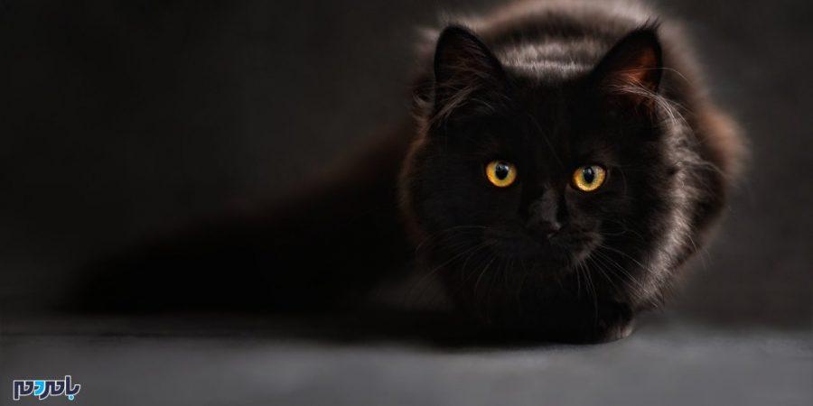 چگونه یک گربه هوشمند مامور سازمان سیا شد؟!