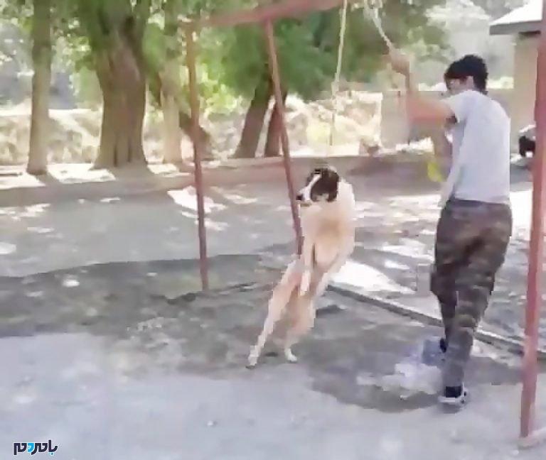 ماجرای اعدام وحشیانه یک سگ در رشت