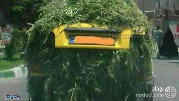 6rpnw crop c0 5 0 5 700x394 75 600x338 - پراید گیاه خوار در ایران رویت شد ! + عکس