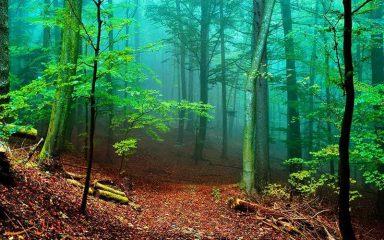 تا ۳۰ سال آینده جنگلی در شمال نخواهیم داشت