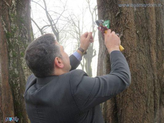 های دومین روز هفته منابع طبیعی و درختکاری در پارک ساحلی جنگلی آستانه اشرفیه 8 533x400 - برگزاری مسابقه دومیدانی، طرح پلاکگذاری درختان و پاکسازی طبیعت از زباله در پارکساحلی جنگلی آستانهاشرفیه / تصاویر