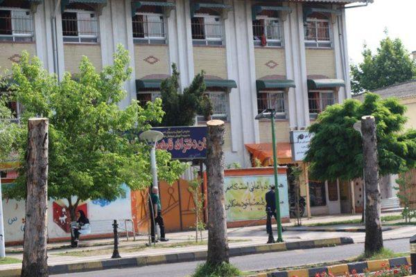 سربرداری درختان بلوار امام خمینی لاهیجان 600x400 - دلیل سربرداری درختان بلوار امام خمینی لاهیجان چیست؟!