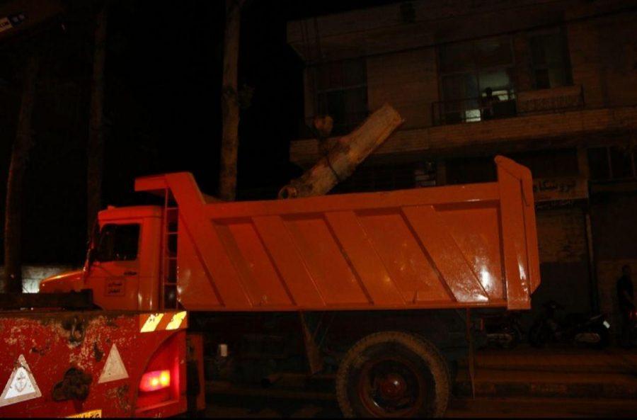 شدید در لاهیجان و سقوط درختان فرسوده 10 - طوفان شدید در لاهیجان و سقوط درختان فرسوده + تصاویر