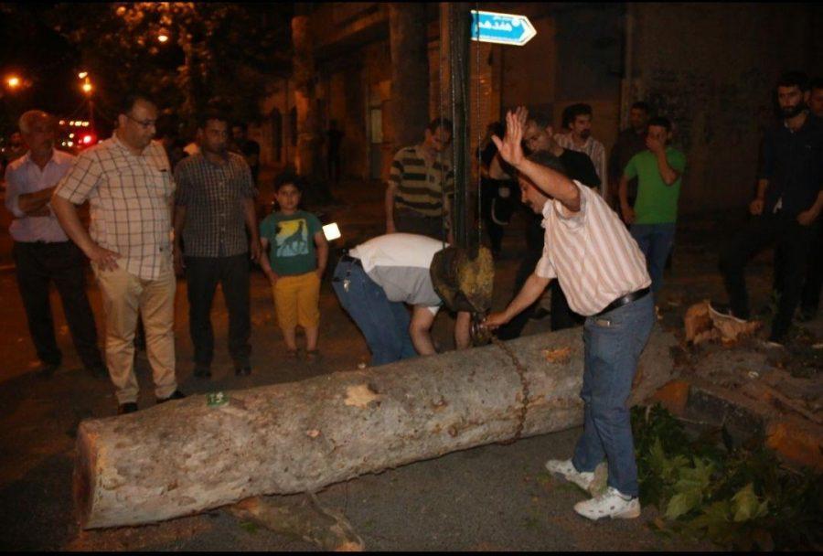 شدید در لاهیجان و سقوط درختان فرسوده 6 - طوفان شدید در لاهیجان و سقوط درختان فرسوده + تصاویر