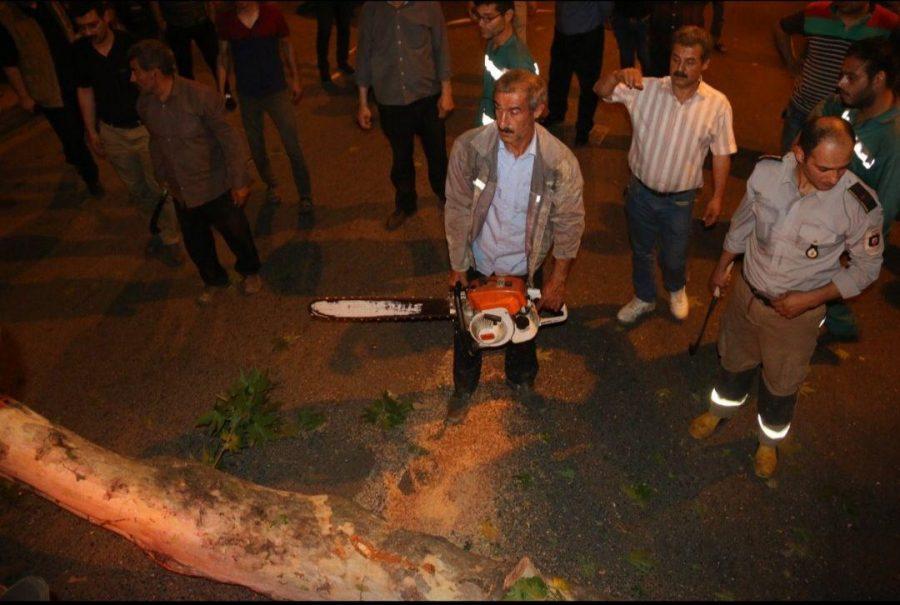 شدید در لاهیجان و سقوط درختان فرسوده 7 - طوفان شدید در لاهیجان و سقوط درختان فرسوده + تصاویر