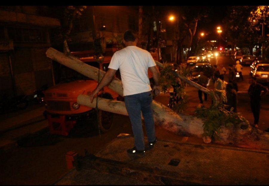 شدید در لاهیجان و سقوط درختان فرسوده 8 - طوفان شدید در لاهیجان و سقوط درختان فرسوده + تصاویر
