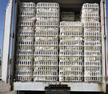 کامیونهای حامل بیش از 3 تن مرغ فاقد مجوز در آستارا توقیف شدند 460x400 - کامیونهای حامل بیش از 3 تن مرغ فاقد مجوز در آستارا توقیف شدند