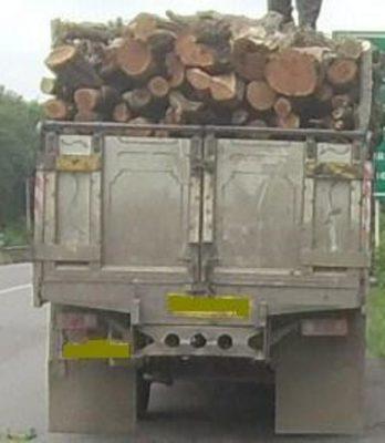 بیش از 4 تن چوب قاچاق در رشت 348x400 - کشف بیش از 4 تن چوب قاچاق در رشت