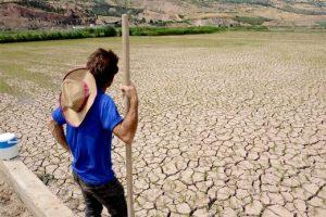 این کویر یک شالیزار در گیلان است! / گزارش تصویری