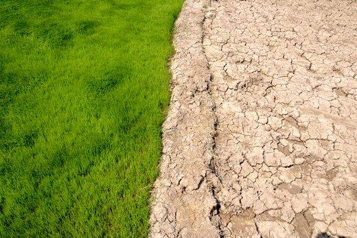 در گیلان 8 - این کویر یک شالیزار در گیلان است! / گزارش تصویری