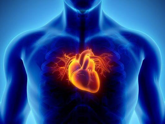 قلب 533x400 - برای سلامت قلبمان چه کنیم؟