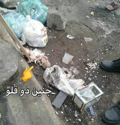 جسد جنین در پارک سمیه رشت 384x400 - کشف جسد جنین در پارک سمیه رشت | (تصویر+۱۸)